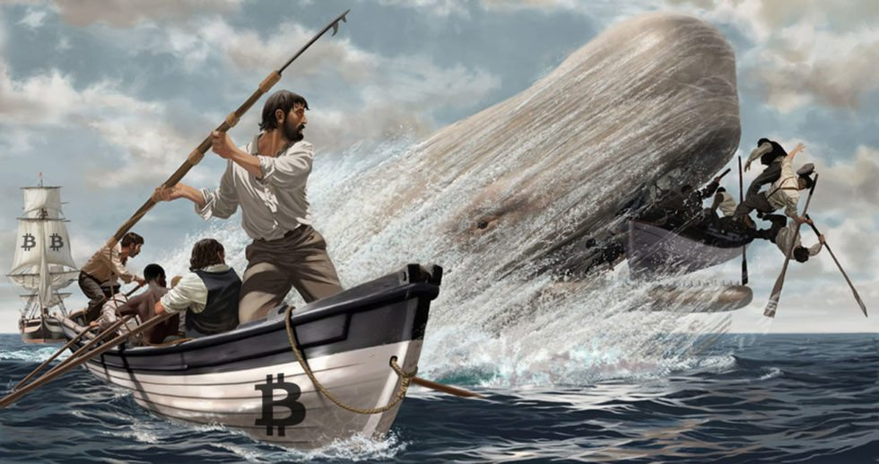 Bitcoin Whale Baleine